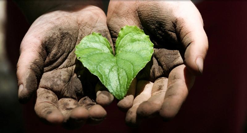 servant heart