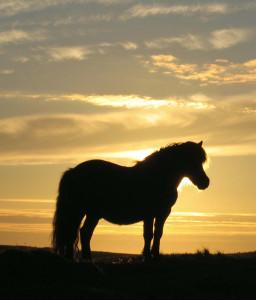 shetland-pony-clivocast-silhouette