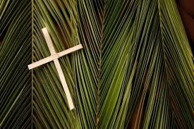 Palm, 03-16
